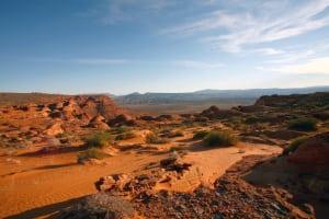 Water Efficient Landscape (3) (1)