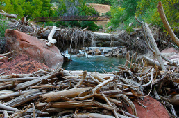 Driftwood-on-the-Virgin-River